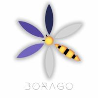 Borago Insights